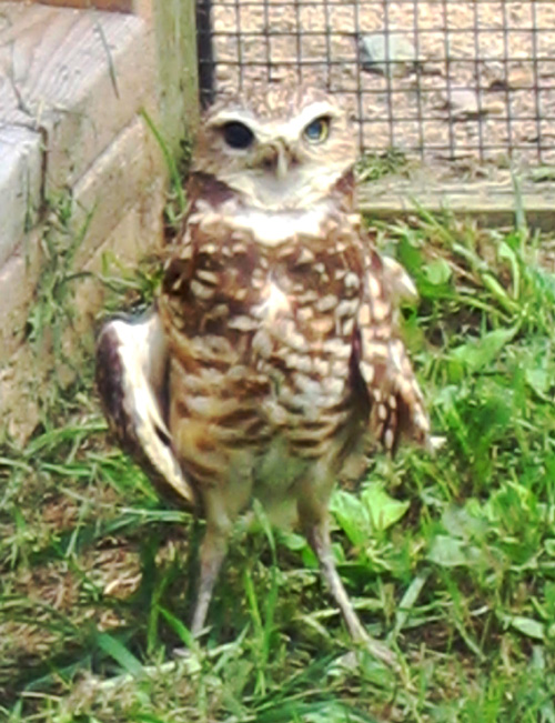 Saskatchewan Burrowing Owl Interpretive Centre Memorial for Cookie