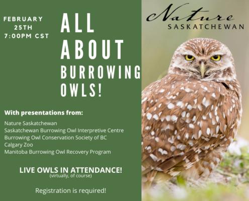 Burrowing Owl Webinar Ad